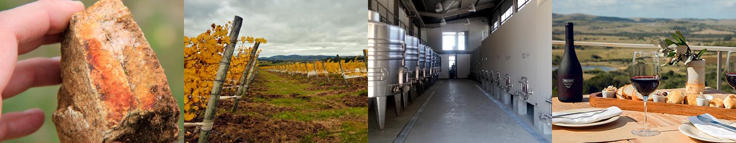 Fotos del proceso del vino